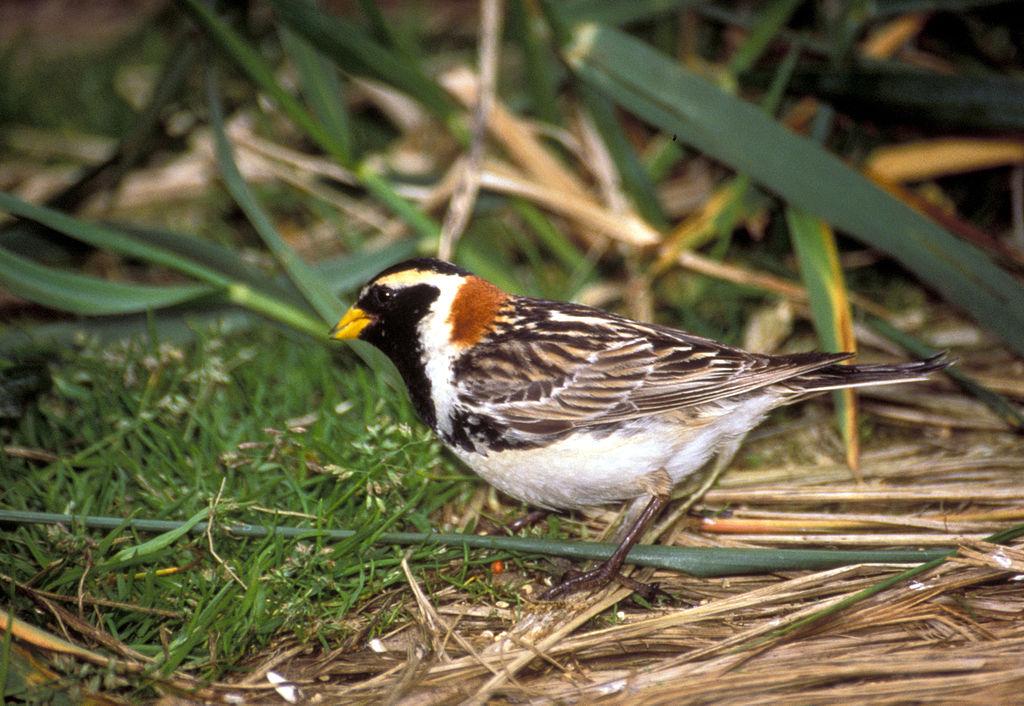 The Birding Nerd: Winter Field Birds in Central Pennsylvania