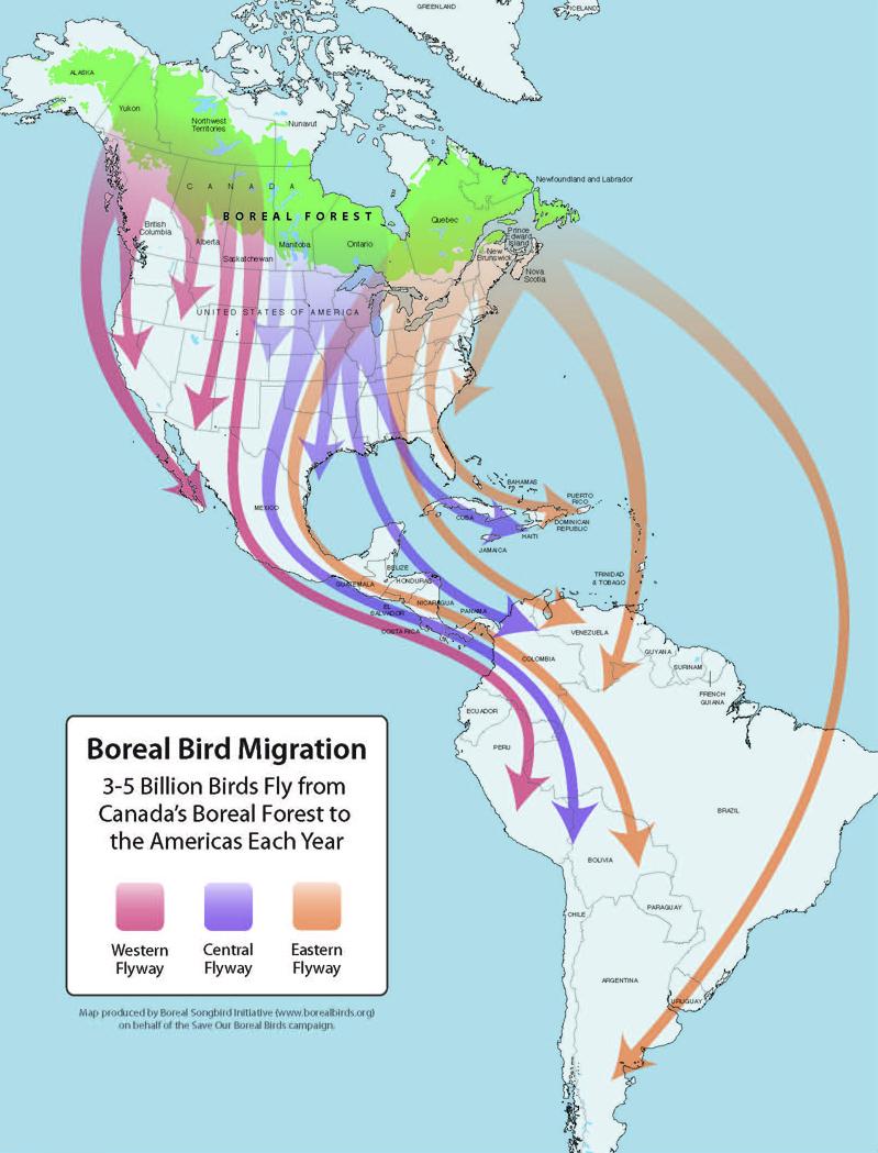 rain bird esp rzx wiring diagram migratory bird diagram renowned conservationist shares his tales of b.c.'s ...