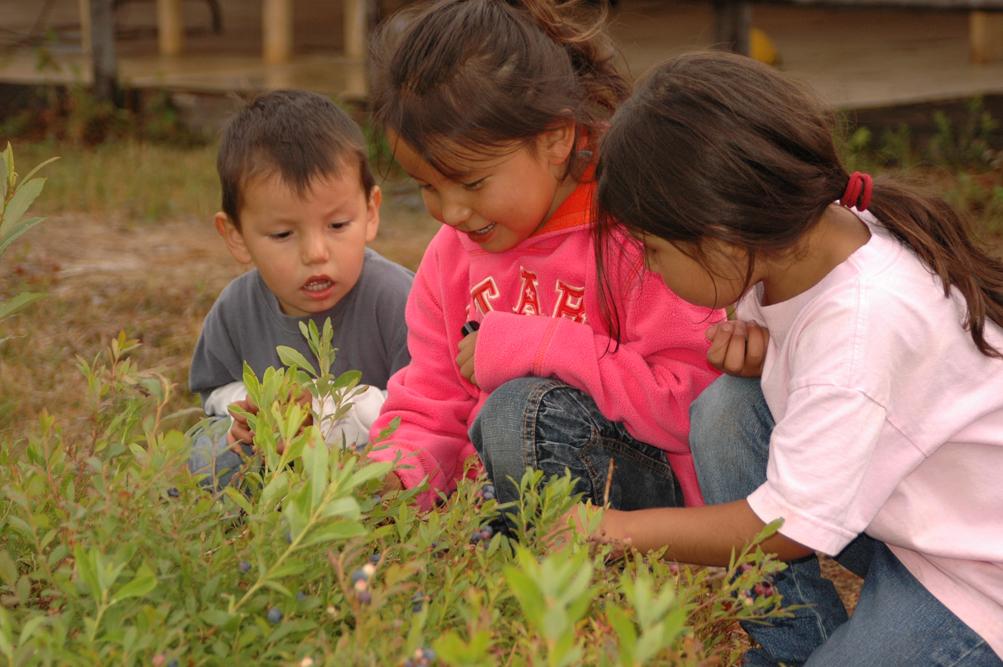 Cree children picking wild blueberries