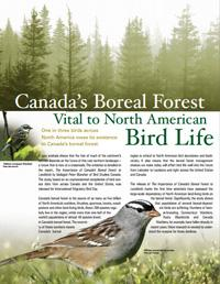 Canada's Boreal Forest: Vital to North American Bird Life