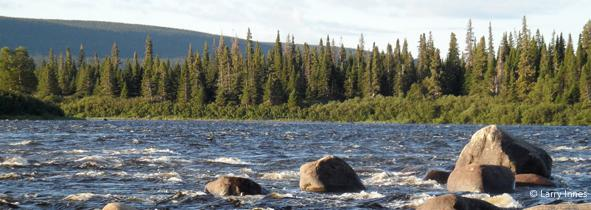 fast facts about canada s boreal forest boreal songbird initiative